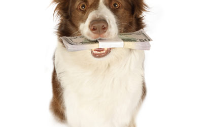 SaddleBrooke Pet Rescue PAYOFF VET DEBT Campaign