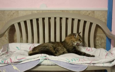 Tucson Shelters Extend a Paw