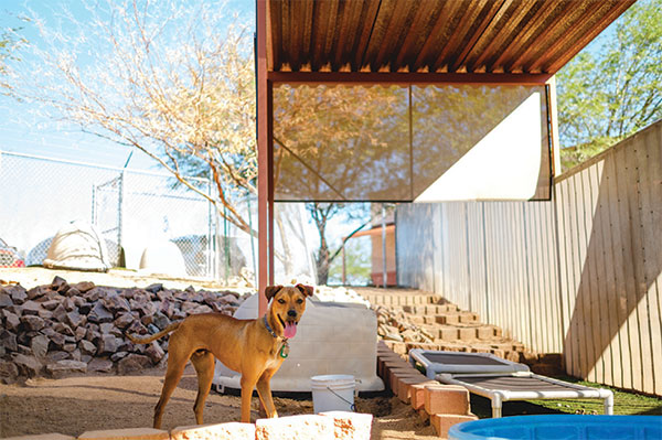 Cover Story: How Green Is Your Valley? For The Animals at The Animal League of Green Valley the Grass is Greener