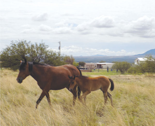 Horsin Around: A Home Where Horses Can Be Horses
