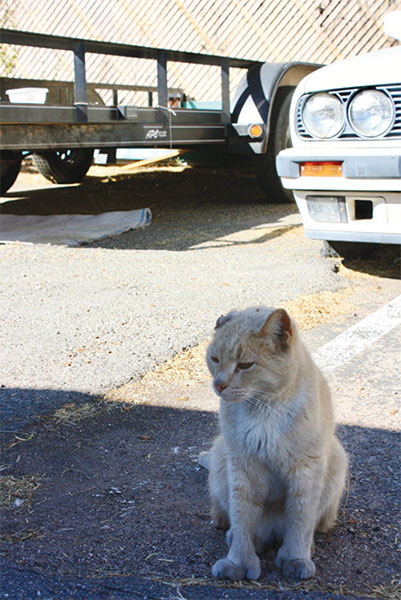 Kitty Korner: ABC's of TNR: Tucson Guide to Community Cats