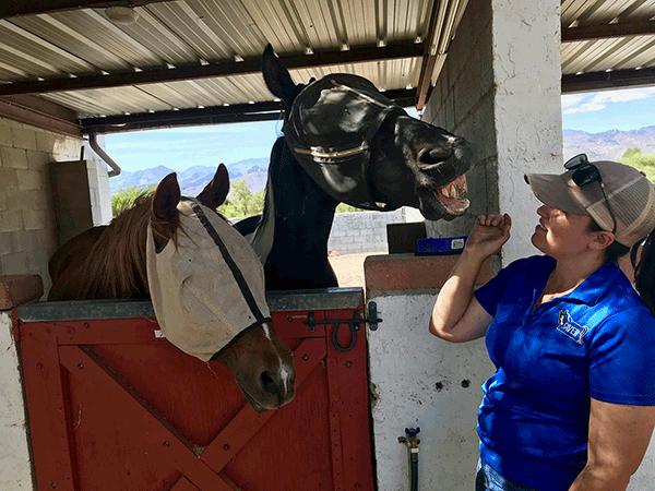 SAVER – Southern Arizona Veterinary Equine Rescue Saving Horses from Euthanasia