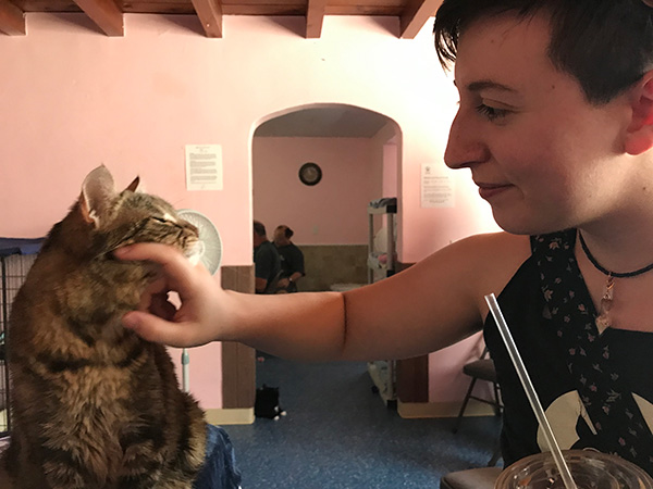 PAWSitively Cats No-Kill Shelter 1st Annual Pop-up Cat Café
