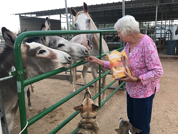 The Soothing Spirit of Donkeys – Zen Donkey Sanctuary