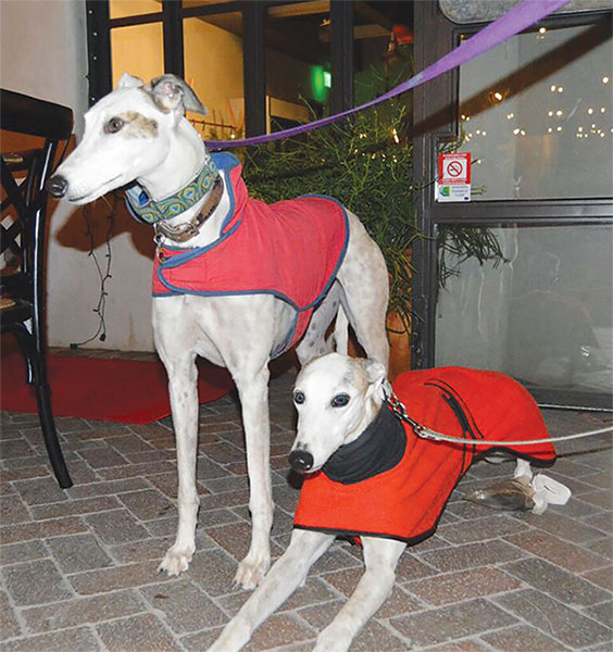 Cover Story: Every Greyhound Gets A Silver Lining