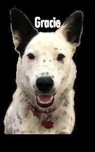 Tucson Dog Logo