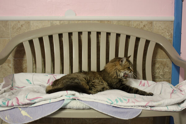 Kitty Korner: Tucson Shelters Extend a Paw to FIV and FeLV-Positive Cats