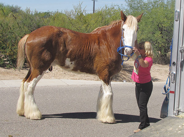 Horsin Around: Therapeutic Loving Caballos