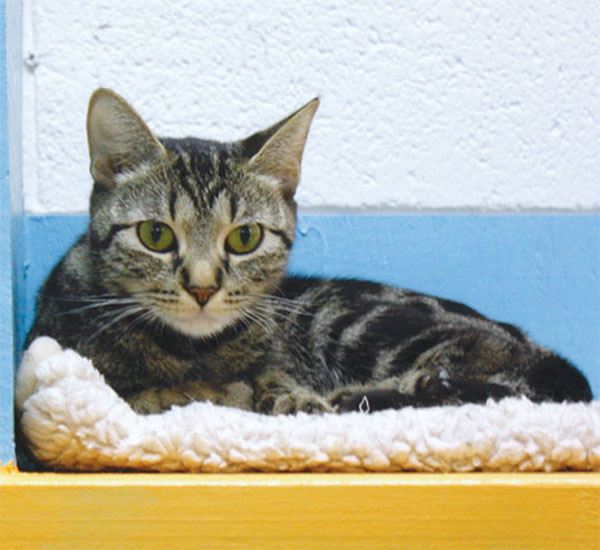 Kitty Korner: Hermitage; For Strays, A New Cat Corral