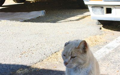 ABC's of TNR: Tucson Guide to Community Cats