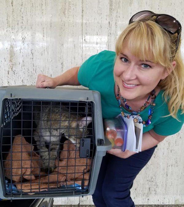 Kitty Korner: Senior Feline Travels to Forever Okla-home-a