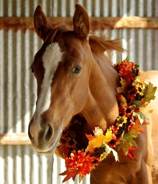 Wild Hearts Ranch Rescue and Escalante Springs Equine Rehabilitation and Sanctuary