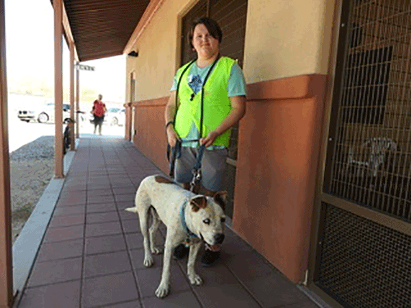 Animal League of Green Valley – School's Out and the Interns are In