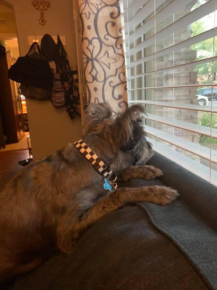 Bueller waiting for something to happen-Mellissa McCullar