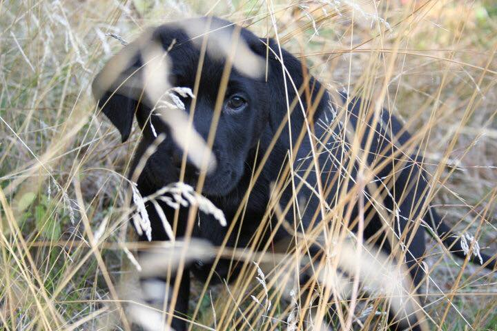 Logan practicing his hunting skills-Mike Stokes
