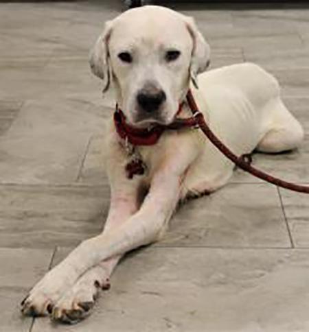 Southwest Oasis Labrador Rescue – A Labor of Love
