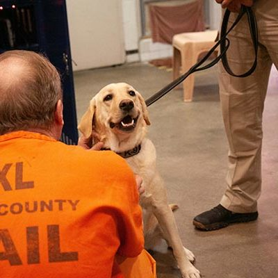 Pima County Sheriff's Therapy Dogs Making a Difference in  our Community