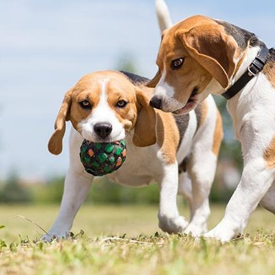 Training: Dog Parks and Socialization