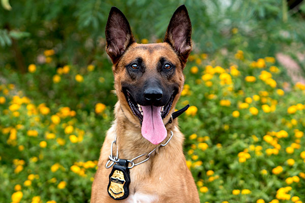 The Customs and Border Protection K9s: Diverse Training Saves Lives