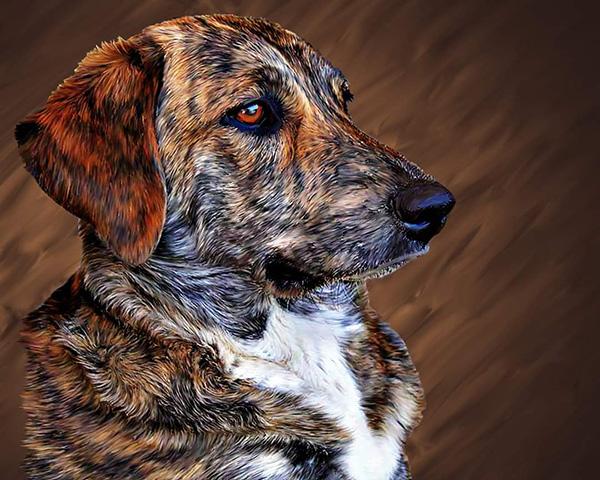 Celebration of Life: Sheesha; The Dog Who Saved My Life!