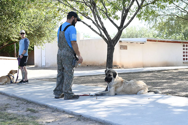 Soldier's Best Friend, Helping Veterans Live Better Lives with the Support of Furry Friend
