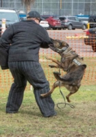 WOOFstock---pic7---TD-Police-K9-Unit-Demo
