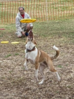 WOOFstock-pic-25---Desert-Disc-Dog-Demo-was-a-blast